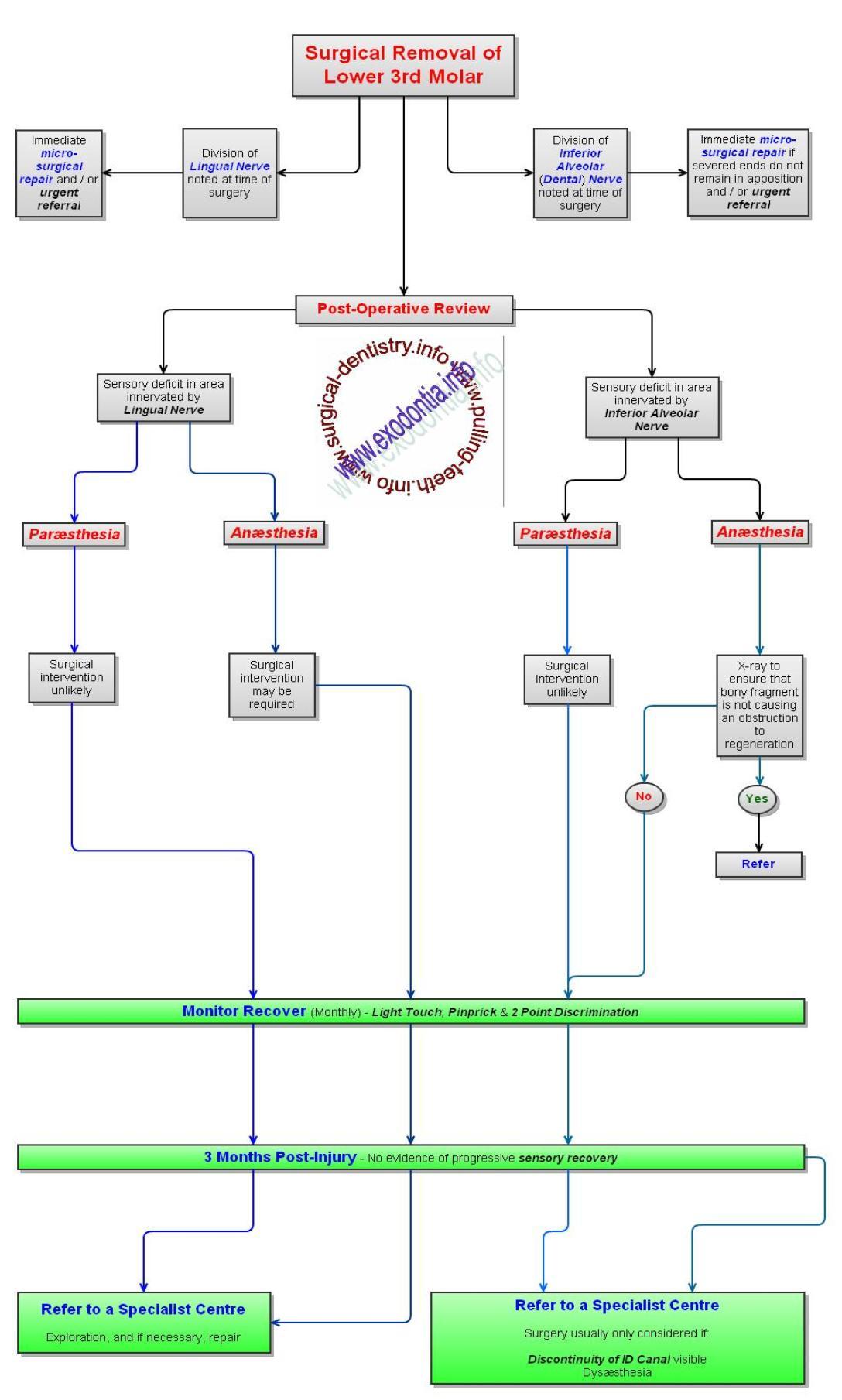 Dental_Nerve_Injury_Treatment_Protocol-1088x1809